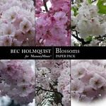 Blossoms Paper Pack-$1.99 (Bec Holmquist)
