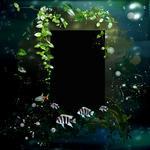 Aquatica qp p002 small
