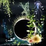 Aquatica qp p005 small