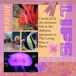 Marine Life (annirana)