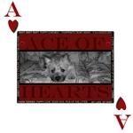 Ace of hearts (NursegreeneyesRN)