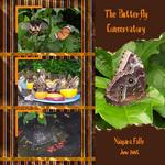 The Butterfly Conservatory (cmarcum01@aol.com)
