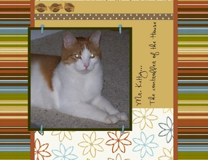 Mr kitty p001 medium