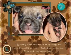 Puppies p001 medium
