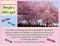 Pink trees p002 thumb
