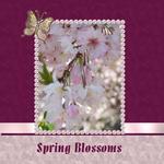 Spring Blossoms (cmarcum01@aol.com)