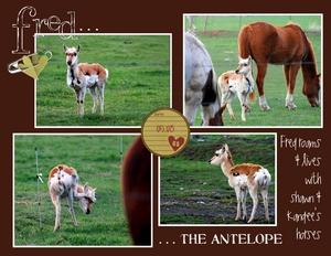 Animals p003 medium