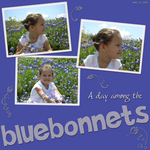 Bluebonnet Delight (marjohn)