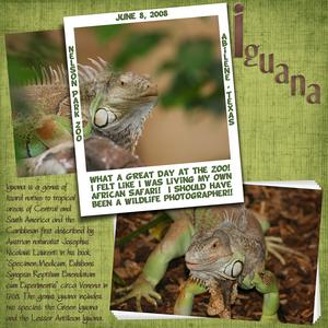 Iguana copy medium