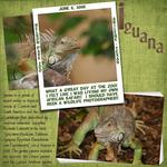 Iguana (marjohn)