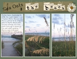 Sea Oats & The Beach (BeachScraper)