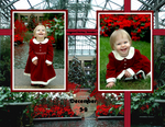 Christmas at Longwood Gardens (Montana)