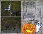 Halloween Ducks (BeachScraper)