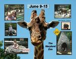 A day at the Maryland Zoo (Montana)