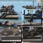 Sea Lions (audosborne)