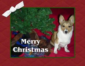 2008 pidge christmas card p001 medium
