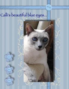 Calli monochomatic blue p001 medium