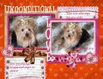 Unconditional Love (yorkie1257)
