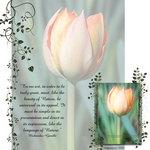 Spring Tulips (cmarcum01@aol.com)