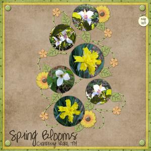 7 spring blooms medium