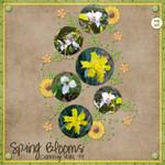 Spring Blooms (merank)