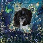 Lovely Lola (cegfar)