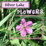Silver Lake Flowers (annirana)