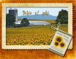Sunflowers_2-p002-small