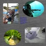 LB Aquarium (kellyfloyd)