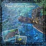 Maui Ocean Center (Jesse77)