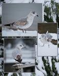 God's Creations in the Snow (kksones)