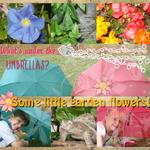 Garden flowers (annirana)