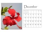 Deb's desktop calendar p013 small